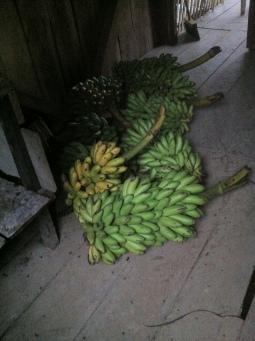 Oritoville harvest